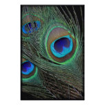 Peacock Feathers Vertical Poster