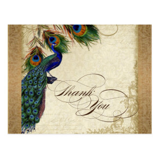 Peacock & Feathers Vintage Gold Look Damask  Swirl Postcard