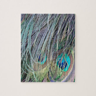 Peacock Feathers Wild Colors Jigsaw Puzzle