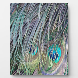 Peacock Feathers Wild Colors Plaque