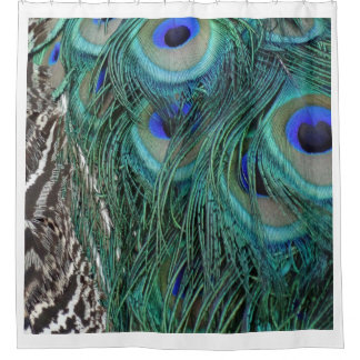 Peacock Feathers With Big Blue Eyes Shower Curtain