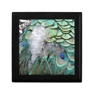 Peacock Feathers With Blue Eyes Gift Box