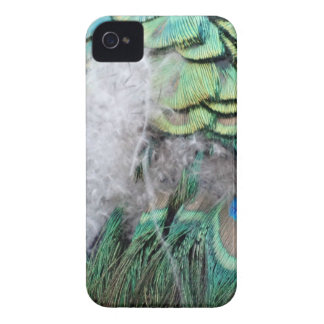 Peacock Feathers With Blue Eyes iPhone 4 Case-Mate Case