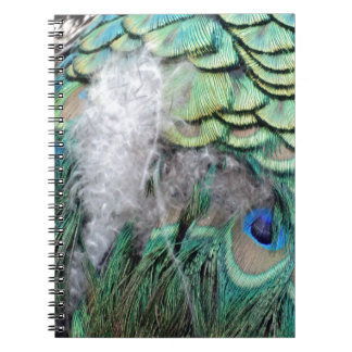 Peacock Feathers With Blue Eyes Notebook