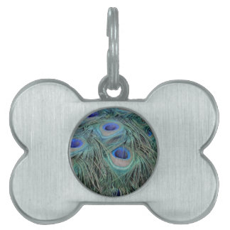 Peacock Feathers With Eye Spots Pet ID Tag