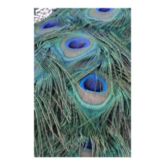 Peacock Feathers With Eye Spots Stationery