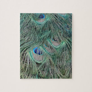 Peacock Feathers With Pick Boo Eyes Jigsaw Puzzle