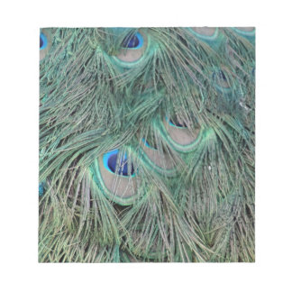 Peacock Feathers With Pick Boo Eyes Notepad