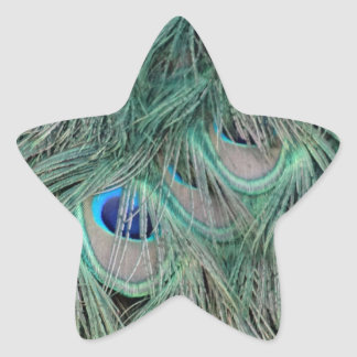 Peacock Feathers With Pick Boo Eyes Star Sticker