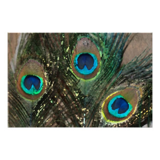 Peacock Feathers with Rocks Print