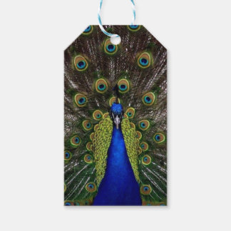 Peacock Gift Tags