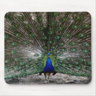 Peacock gifts Peafowl mousepads feathers picture