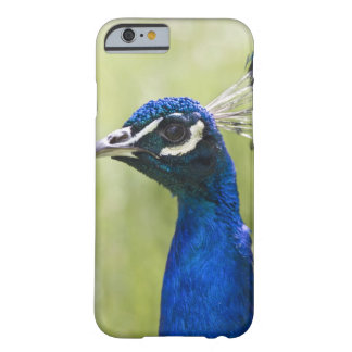 Peacock head barely there iPhone 6 case