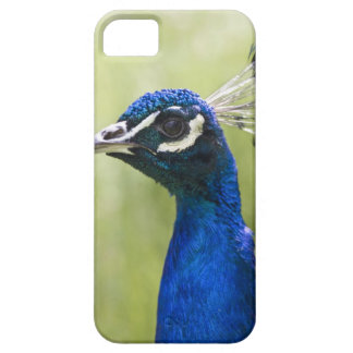 Peacock head iPhone 5 cover