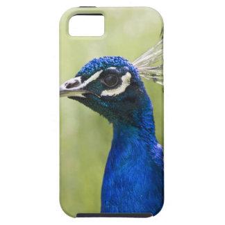 Peacock head tough iPhone 5 case