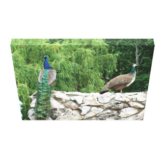 Peacock in a Garden photography Print Wall Art Canvas Prints