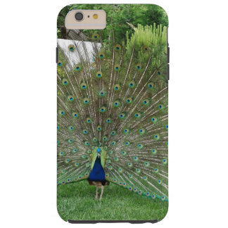 Peacock in a garden tough iPhone 6 plus case