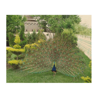Peacock in a Garden Wood Wall Art