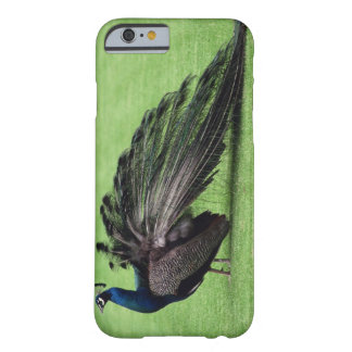 Peacock in field barely there iPhone 6 case