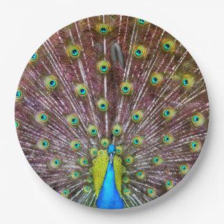 Peacock in Full Regalia Paper Plate
