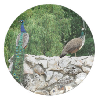 Peacock in  Garden Photo Melamine Plate