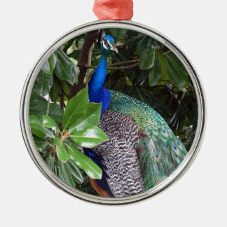 Peacock In Magnolias Christmas Ornament