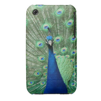 Peacock Iphone Cover iPhone 3 Cover