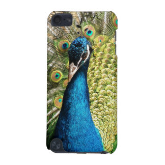 Peacock iPod Touch 5G Cover