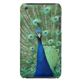 Peacock Ipod Touch Cover