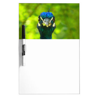 Peacock is watching you Dry-Erase board