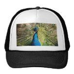 Peacock Mesh Hats