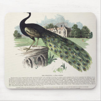 Peacock Mouse Mat
