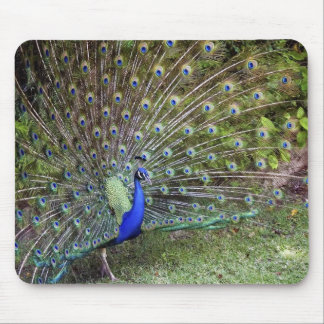 Peacock Mousepad