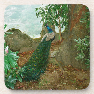 Peacock near a castle in northern Portugal. Drink Coasters