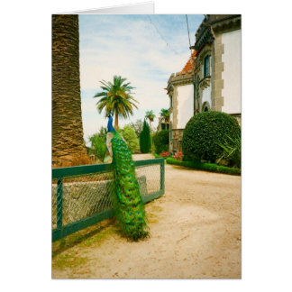 Peacock near a castle in northern Portugal. Greeting Card