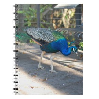 Peacock Notebook