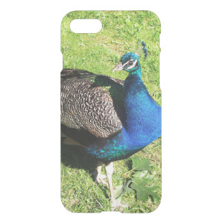Peacock on green grass iPhone 7 case