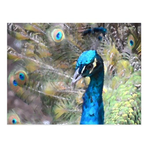 peacock painting look left side head post cards