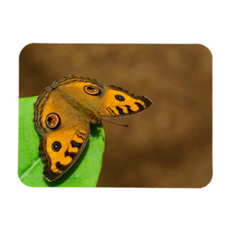 Peacock pansy  butterfly magnet