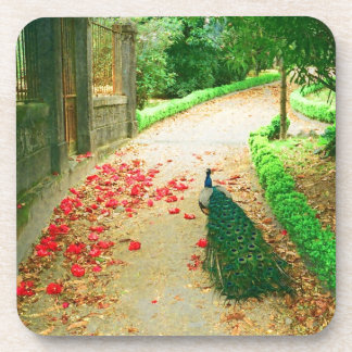 Peacock path near a castle in northern Portugal. Drink Coaster