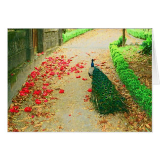 Peacock path near a castle in northern Portugal. Greeting Card