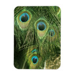 Peacock/Peafowl Feathers Flexi Magnet