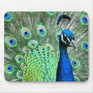 PEACOCK PEAFOWL PHOTO MOUSE PAD