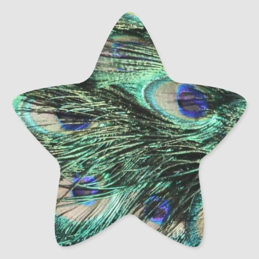 Peacock (Peafowl) Tail, Feathers - Green Blue Star Sticker