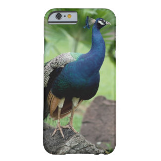 Peacock perched on rock barely there iPhone 6 case