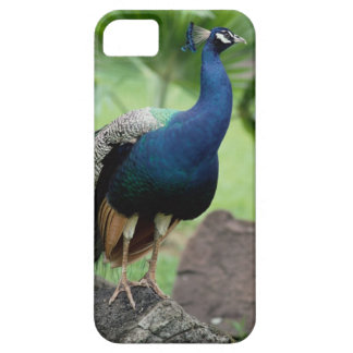 Peacock perched on rock iPhone 5 covers
