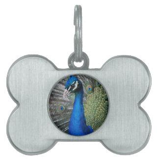 Peacock Pet ID Tag