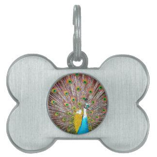 Peacock Pet ID Tags