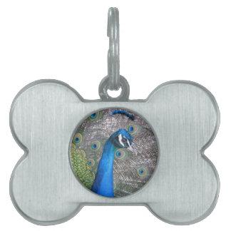 Peacock Pet Name Tag