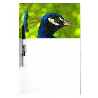 Peacock (Pfau) Dry Erase Board